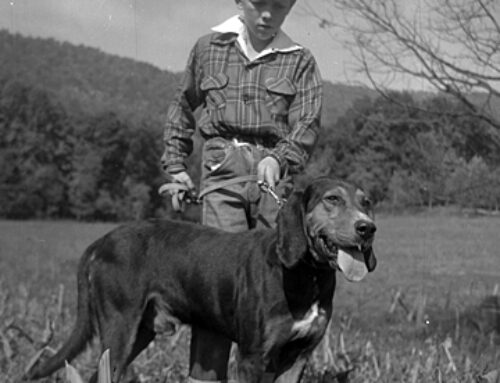 Find Out Why The Plott Hound is a Smoky Mountain Man's Best Friend