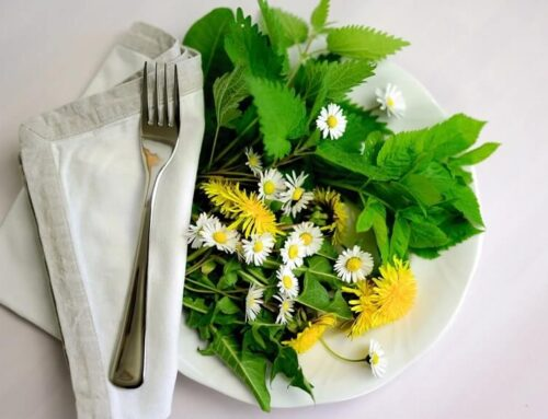 Feast on Nature's Garden When You Go Foraging for Edible Plants in North Carolina