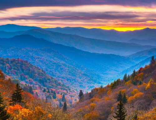 Check Out These 10 Surprising Facts About the Great Smoky Mountains