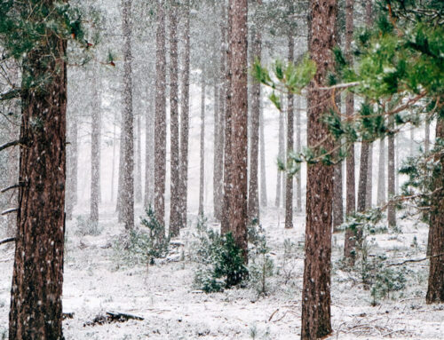 9 Pictures to Inspire Your Smoky Mountain Winter Vacation Dreams