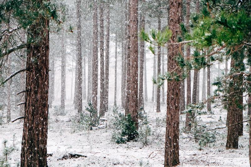 Smoky Mountains winter